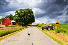chicken crossing road on farm with barn and chicken on tractor