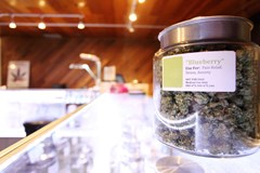 Insurance for Marijuana Dispensaries