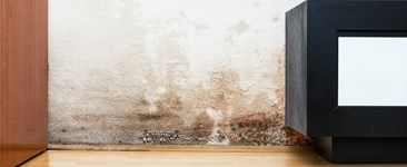 Mold Damage and Home Insurance